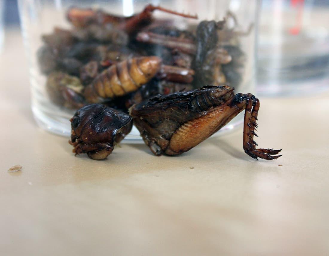 Zoom sur un gros insecte comestible dans le sachet des insectes comestibles
