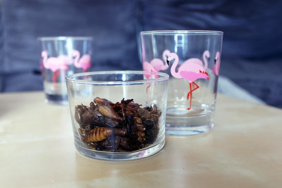 insectes comestibles dans verre flamand rose