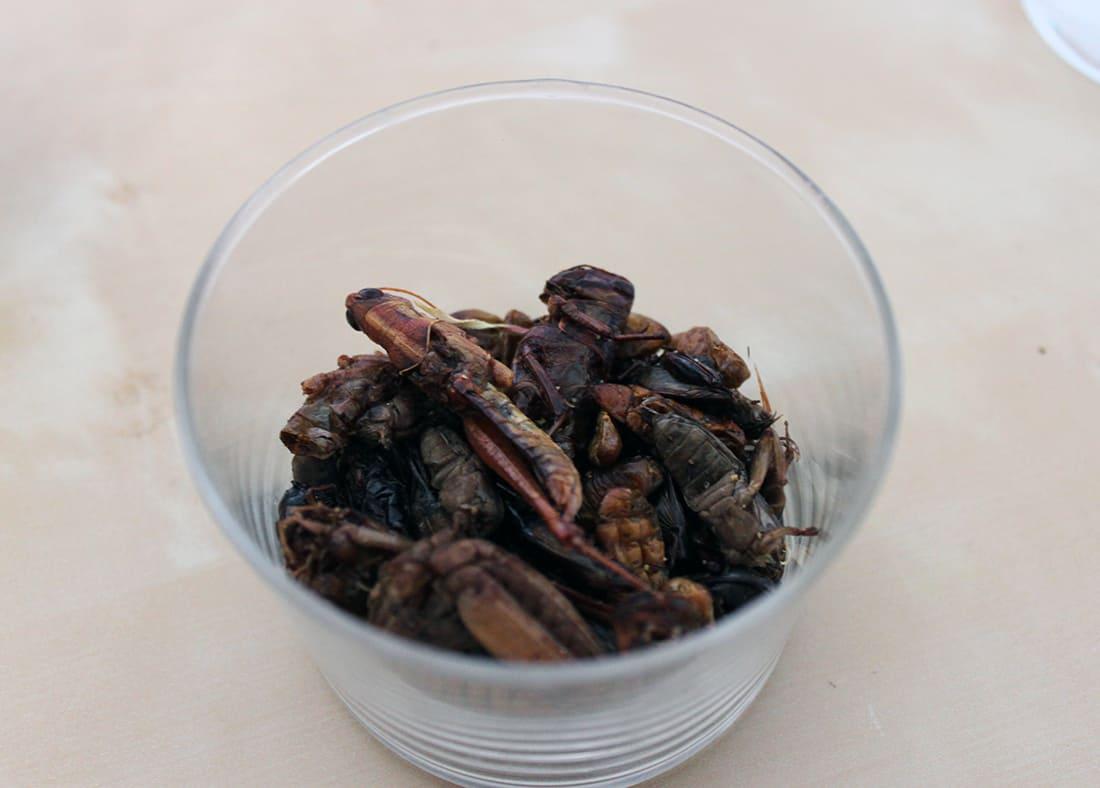 zoom insectes comestibles dans le bocal