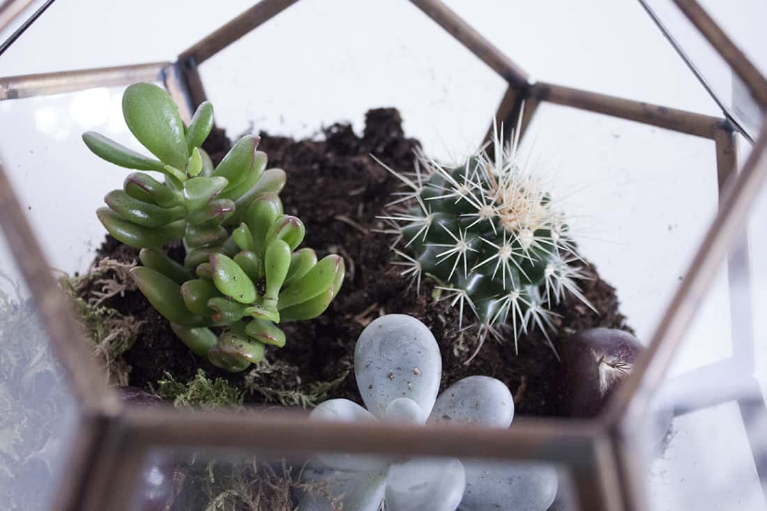 composition du terrarium