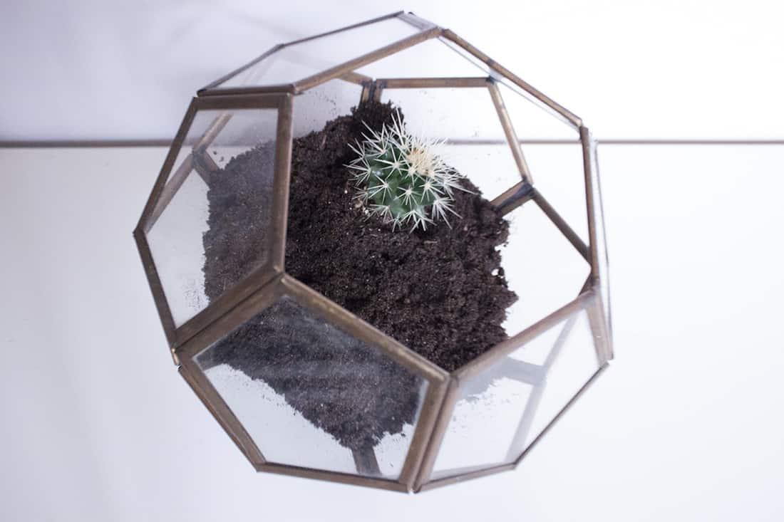 installation du premier cactus dans le terrarium