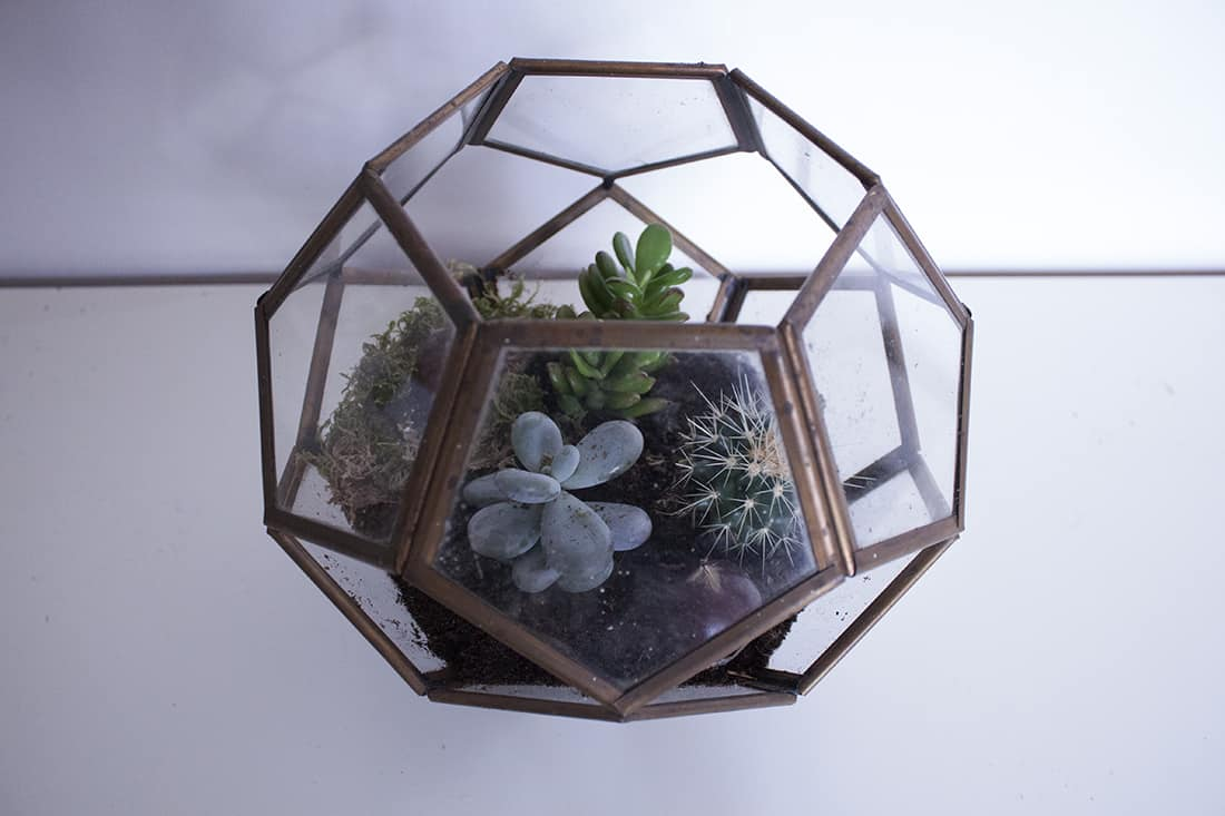 le terrarium final - Do it yourself : composer son propre terrarium
