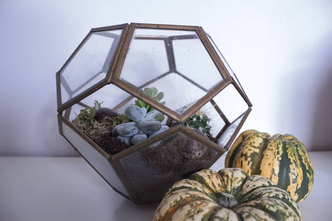 le terrarium termine - Do it yourself : composer son propre terrarium