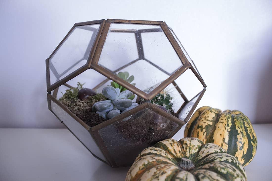 le terrarium termine - Do it yourself : composer son propre terrarium