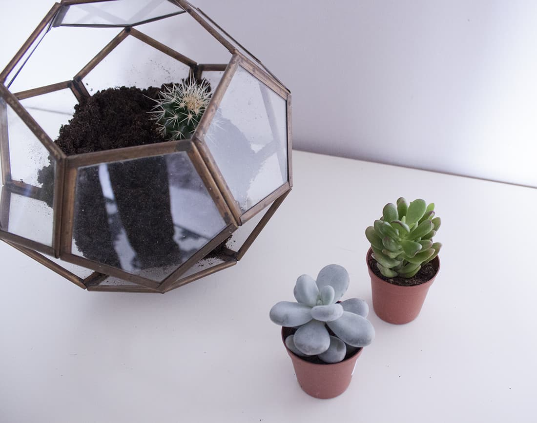 les petits cactus pour le terrarium - Do it yourself : composer son propre terrarium