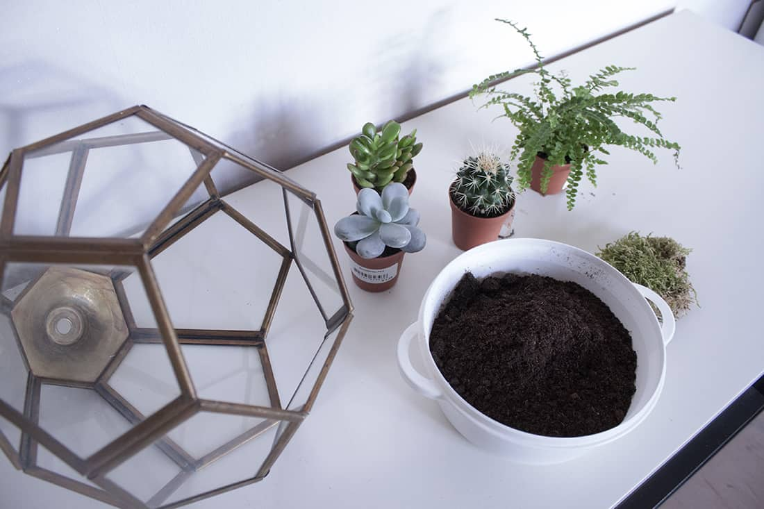 materiel pour la realisation du terrarium - Do it yourself : composer son propre terrarium