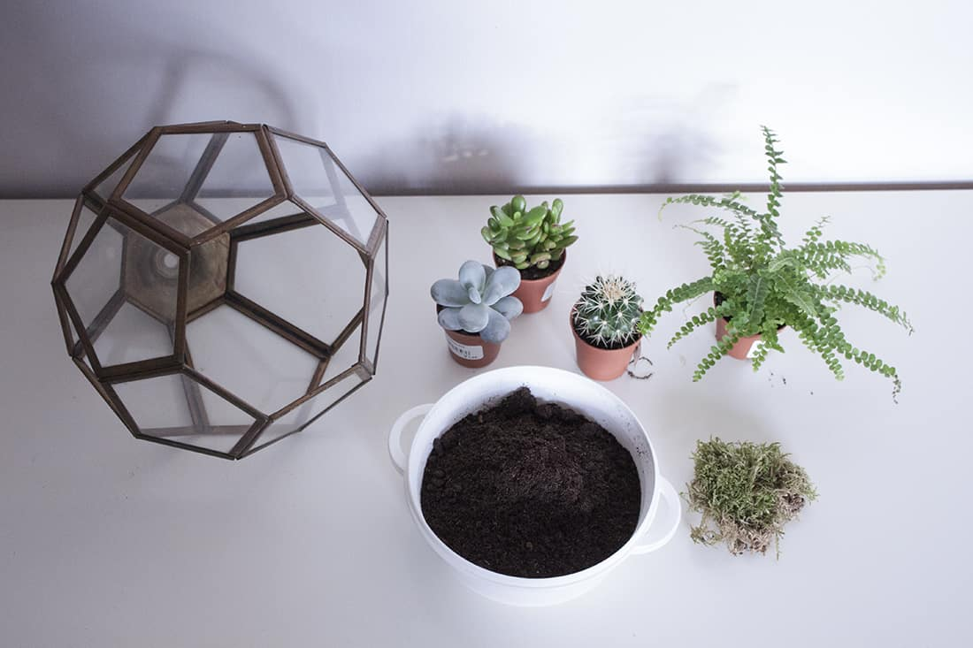materiel pour le do it yourself terrarium