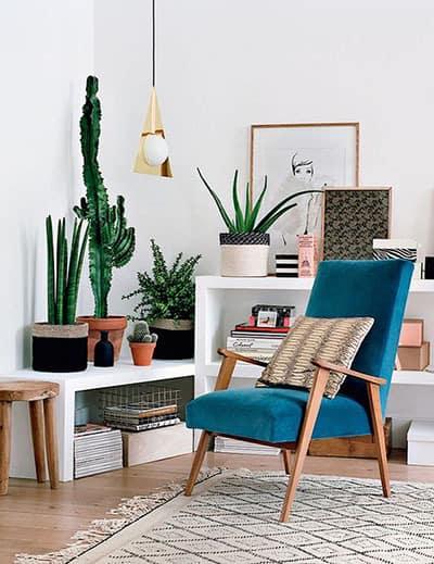 plante pour plus de couleur dans le salon