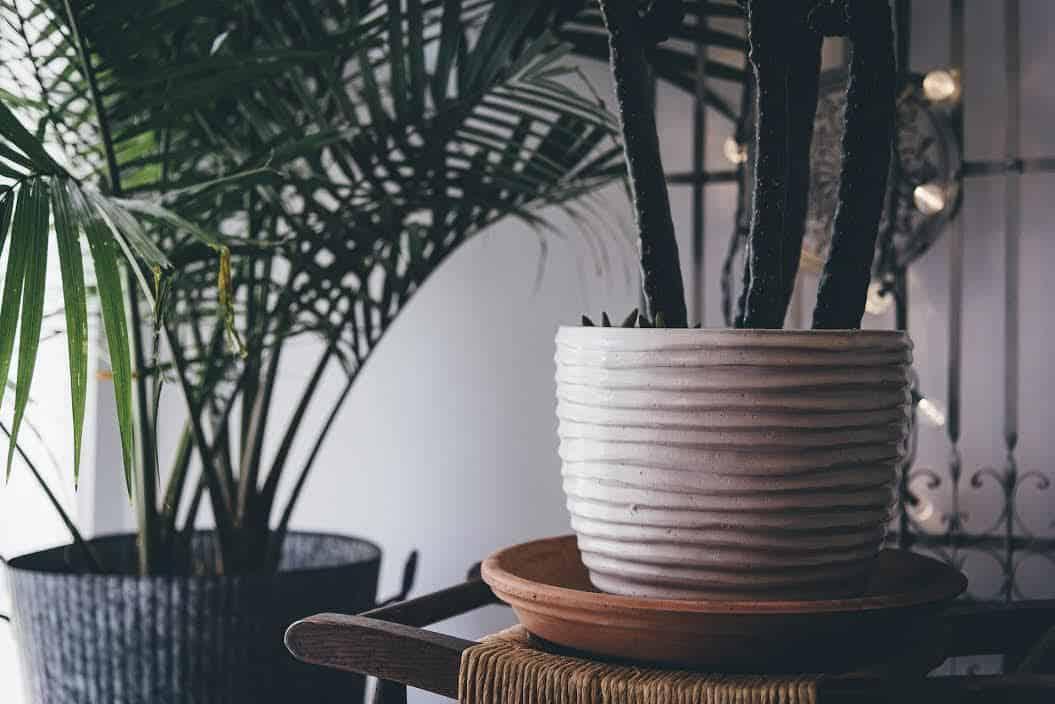 plantes et pots en céramique  - Actu : comment donner un coup de jeune à la déco