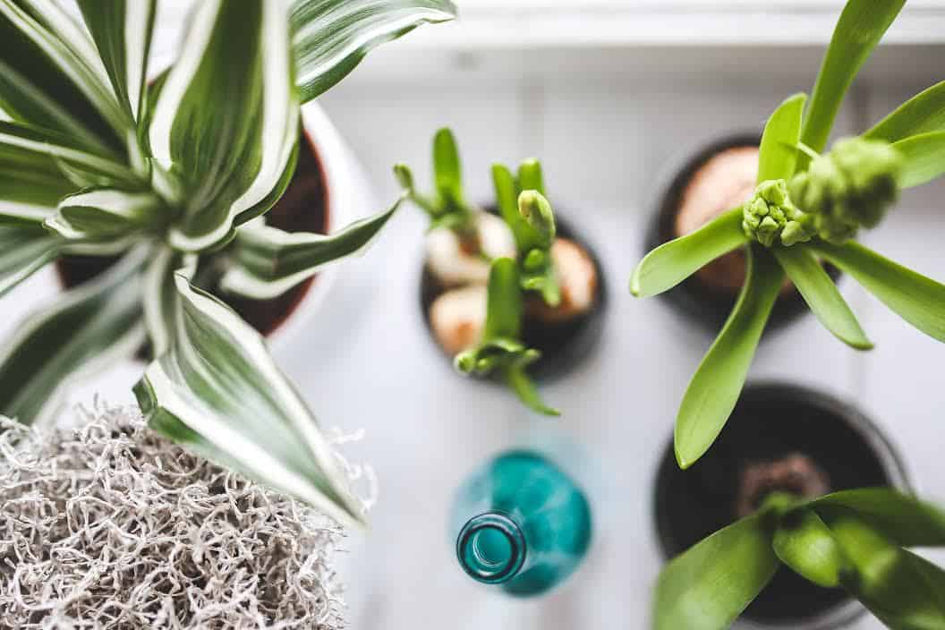 plantes grasses - Actu : comment donner un coup de jeune à la déco