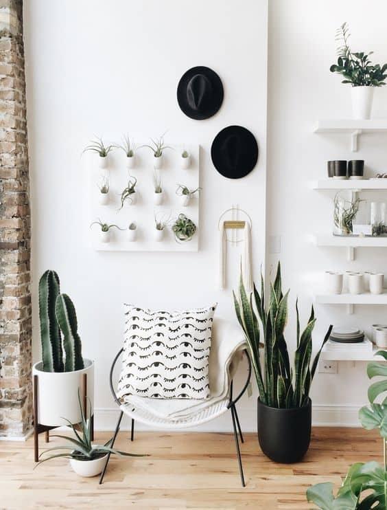 des plantes grasses modernes comme fleurs