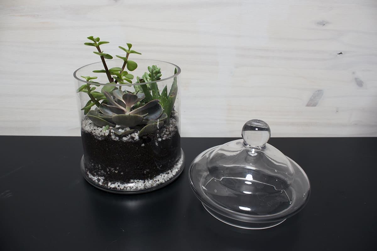 lit escamotable terrarium cactus