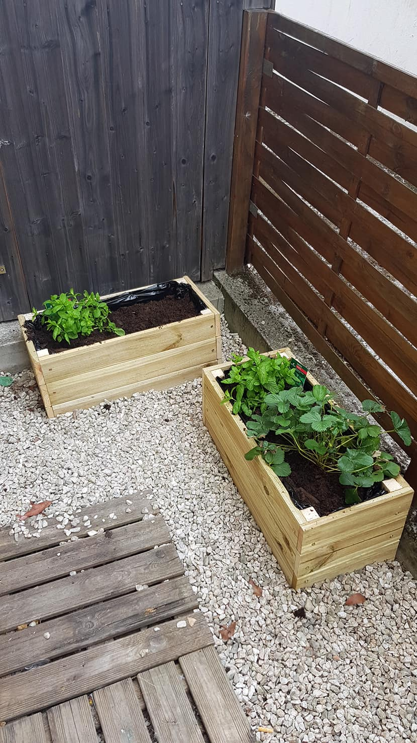 menthe et fraise dans jardiniere jardin - DIY : fabriquer une jardinière en bois pour le jardin