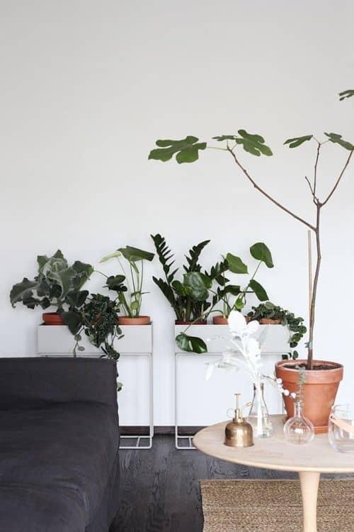 plante pour deco feng shui