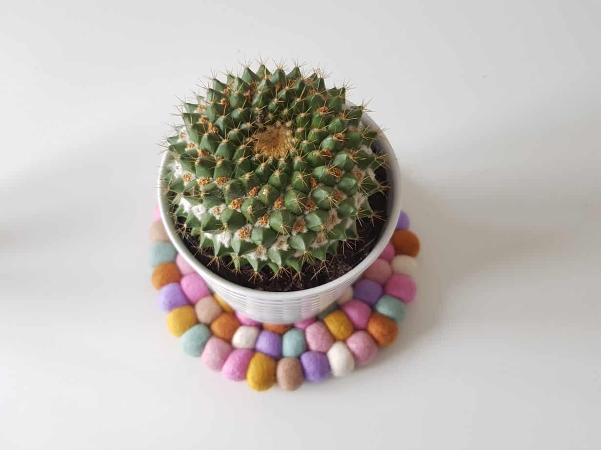cactus sur dessous de plat sukhi