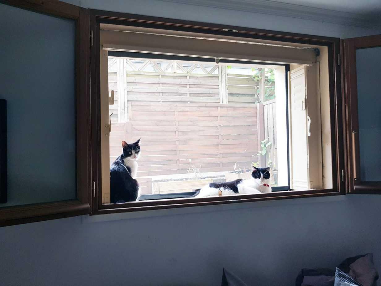 chats a la fenetre Avosdim