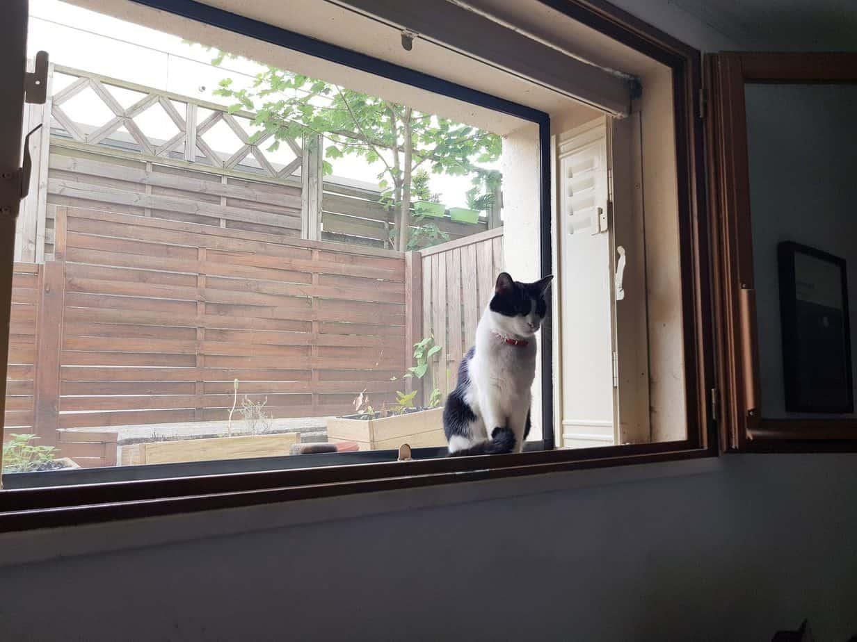 moustiquaire Avosdim chat