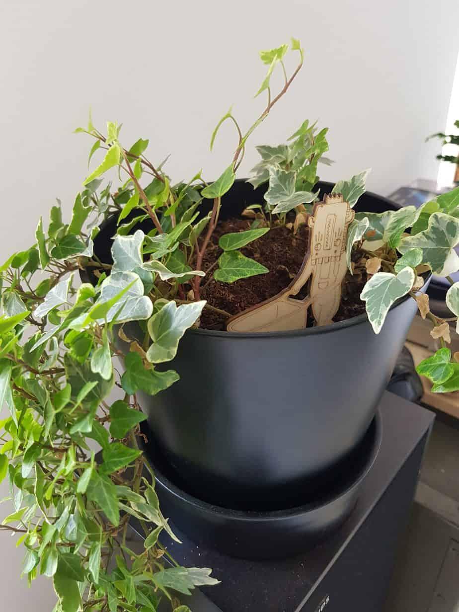 mixitipee deco plante