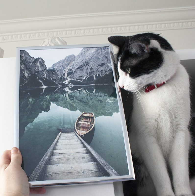 chat et cadre poster store